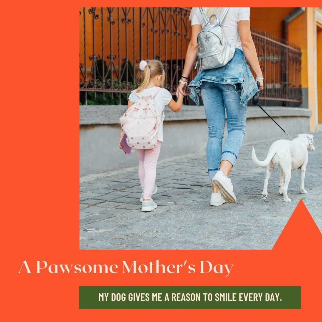 Things Dog Moms Do That Only Dog Lovers Understand